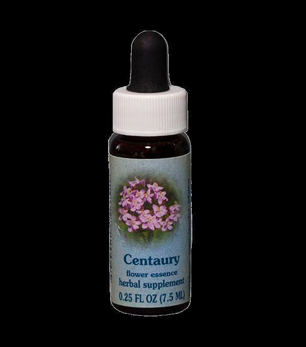 centaury, healing herb, flower essence