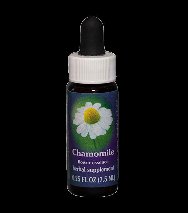 chamomile, fes flower essence