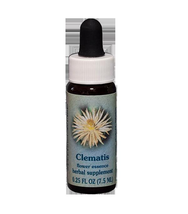 clematis, healing herbs, flower essence