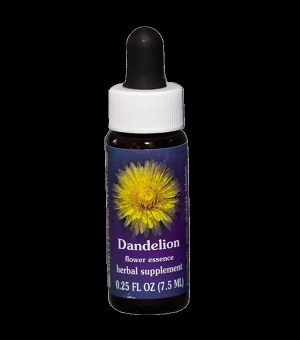 dandelion, fes flower esssence