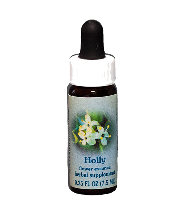 holly. healing herbs, flower essence